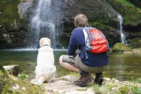 dog at waterfall