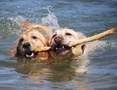 dogs in water